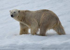 Svalbard Ski & Sail Expedition